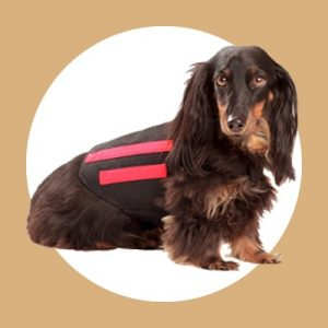 back brace ivdd dachshund aids