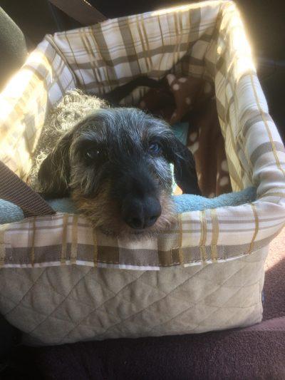 solvit. car seat