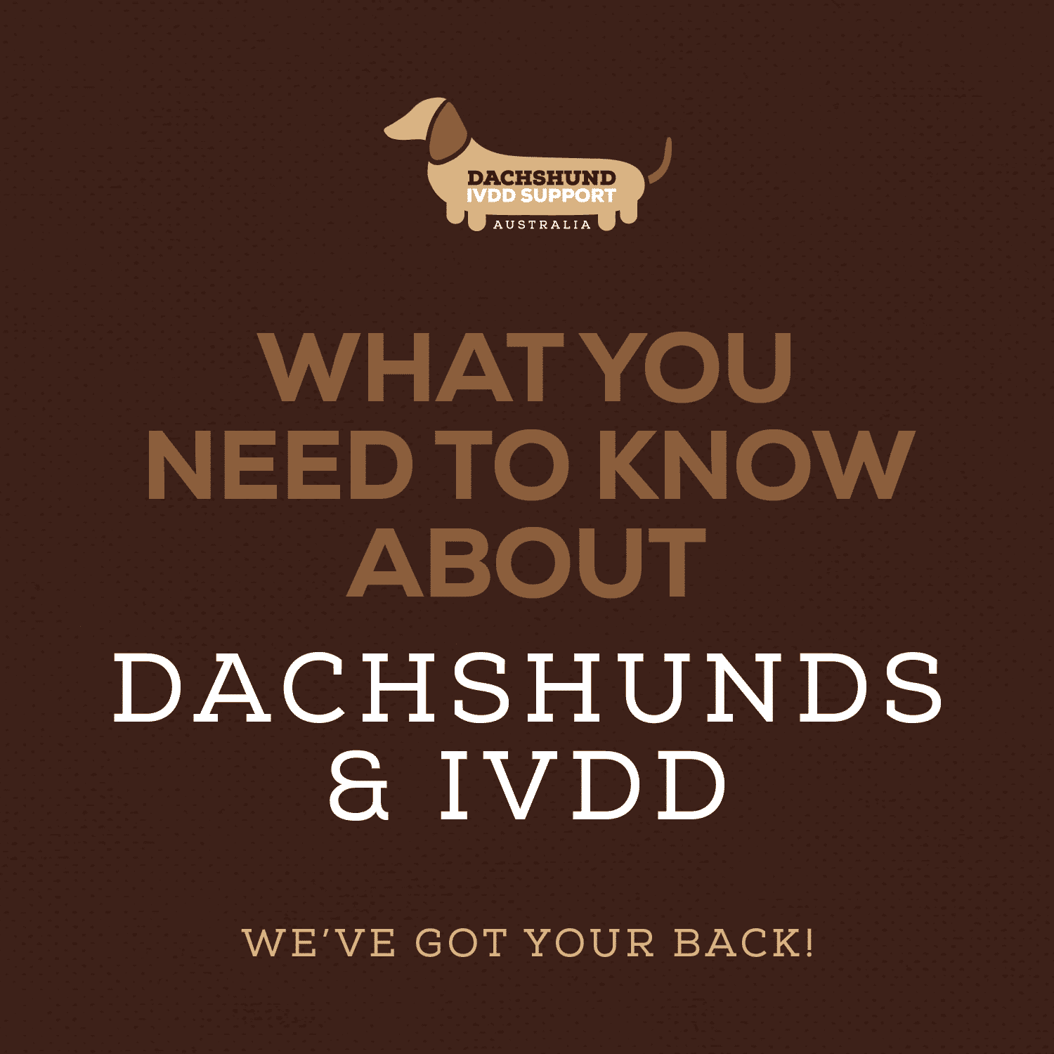 Warning Signs & Symptoms | DISA | Dachshund IVDD Support