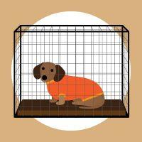 Crate dog